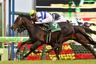 5歳馬のヒシイグアスは、中山で6戦3勝(2着1回)という戦績を誇る。写真:産経新聞社